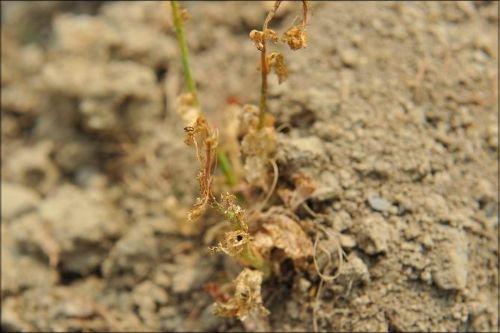 干枯的植物