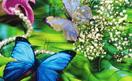 butterfly(蝴蝶)