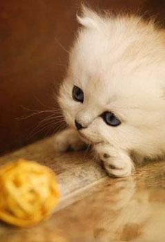 和猫相关的趣味谚语_英语网