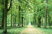 关于植树节的作文
