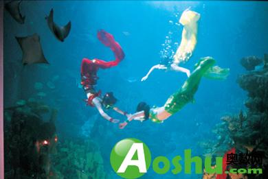 海藻柱,珍品窗,淡水世界,岩石海岸,触摸池,海龟池,企鹅馆,鲨鱼馆,海洋