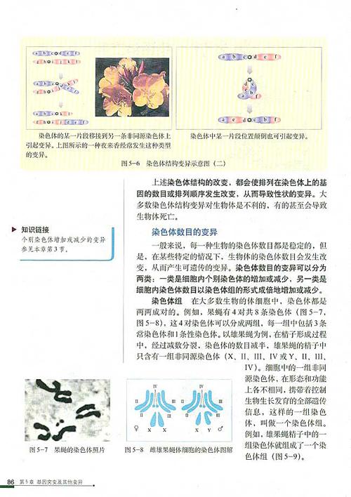 课本各阶段大全生物高中(含教师用书)语文师生恋高中gl老师图片