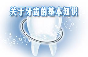 关于牙齿的基本知识