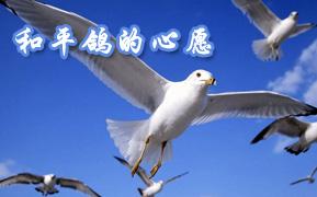 和平鸽的心愿