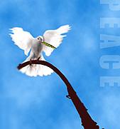 和平的英语作文