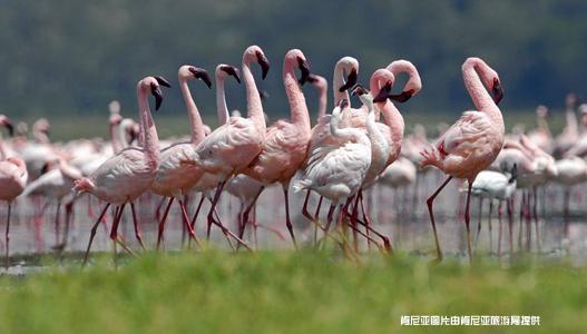 感受地球的脉动 关爱野生动物