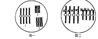 高二生物知识点:染色体变异