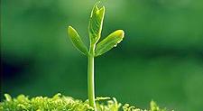 《每一棵草都会开花》