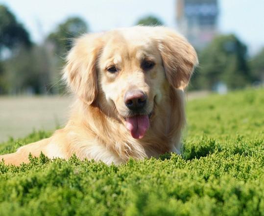小学英语作文范文:可爱的小狗