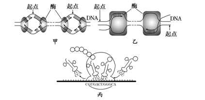 高考生物考点自测:dna分子的复制,转录和翻译(2)图片