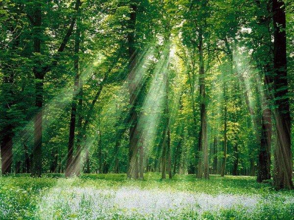 壁纸 风景 森林 桌面 600_450