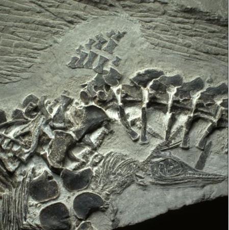 最古老�~��化石