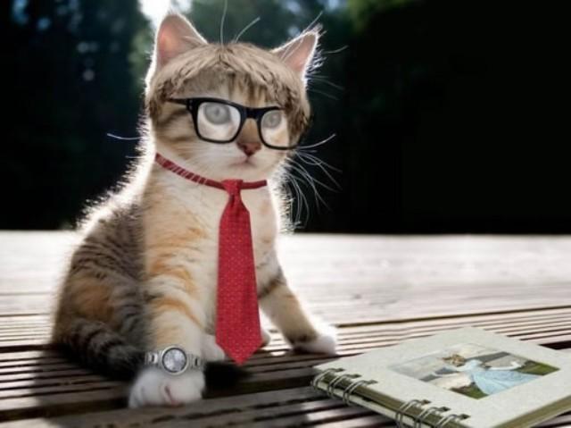 知道在小猫咪们通过它们萌萌的照片和视频入侵互联网之前,这些可爱的小生物们就已经出现在英语口语中的各种成语与表达里了。   事实上,正如猫咪们是你Facebook和YouTube上的重要一部分那样,它们在英语中也占有一席之地。   在我看来,如果你不知道几个关于猫的习语,你就不能算是英语流利。今天我们要教你十三个最重要且流行的关于猫的表达,那是每一个英语学习者都需要知道的。   1.