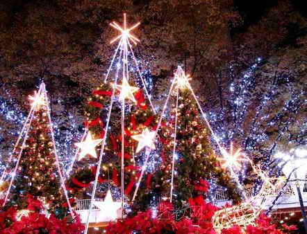 圣诞节图片:室外圣诞树图片