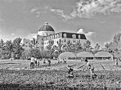 川大锦城学院安排20亩土地供学生耕种