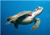 海龟为什么要爬到海滩上产卵?