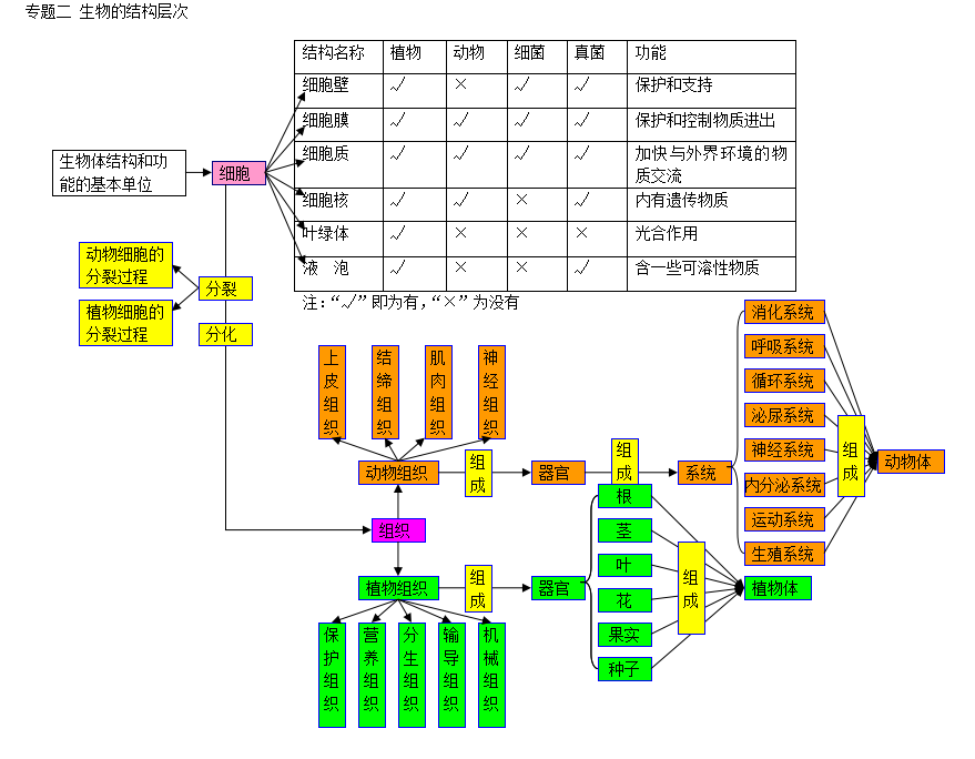初中生物思维导图:生物的结构层次专题