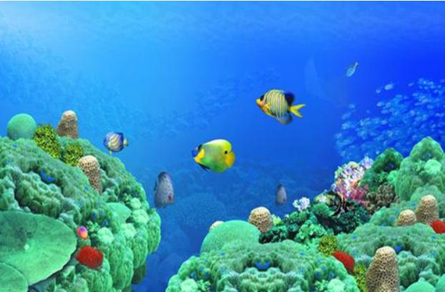 《富饶的西沙群岛》相关图片_小学课文_奥数网