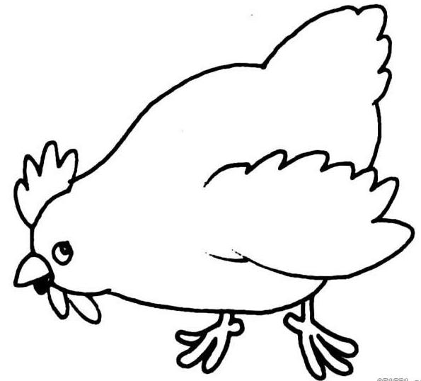 幼儿简笔画步骤图 母鸡 2
