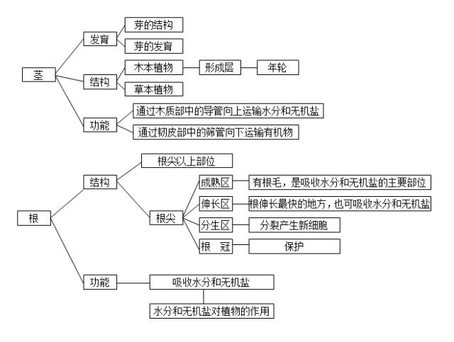 2018中考生物知识点结构图分类整理:生物圈中的绿色植物(2)