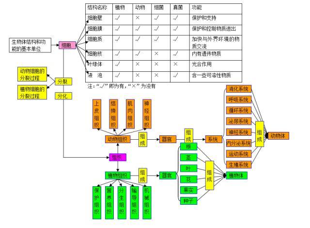 2018中考生物知识点结构图分类整理:生物的结构层次1