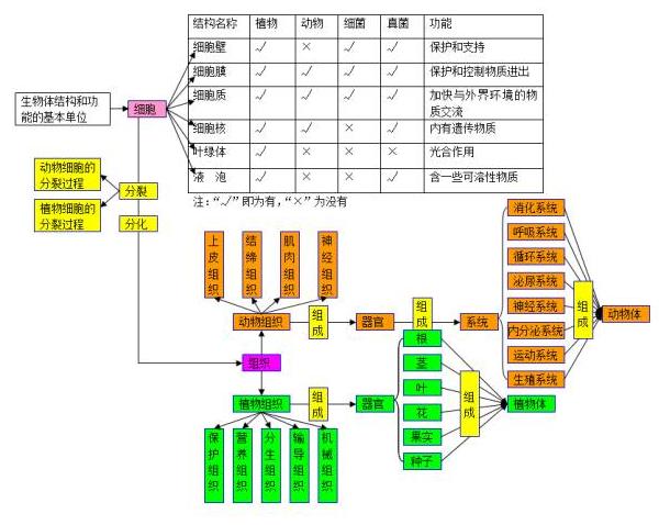 2018中考生物知识点结构图分类整理:生物的结构层次