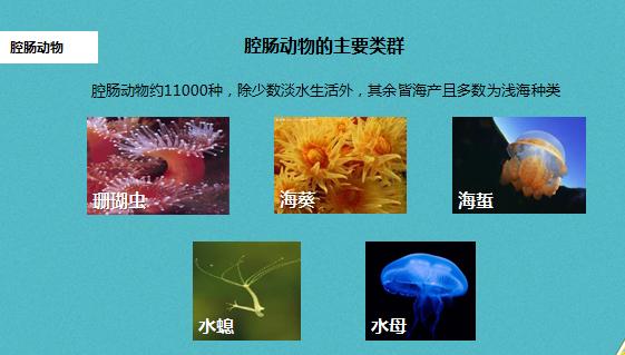 人教版八年级上腔肠动物和扁形动物(下载版)
