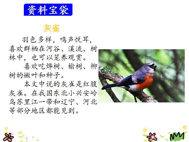 部编版三年级玫瑰上册《灰雀》语文(3)课件小学生折图片
